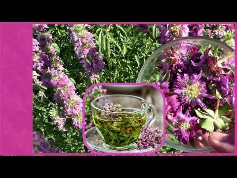 Монарда лимонная, полезные свойства, посадка и уход. Или свой чай с бергамотом - монардой!