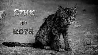 Стих про кота #стихи_про