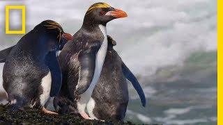 Wildlife: Resurrection Island - Series Trailer   National Geographic