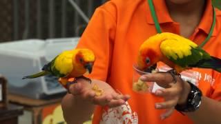 掛川花鳥園では、インコ等の鳥類とのふれあい体験を行う事が出来ます。...