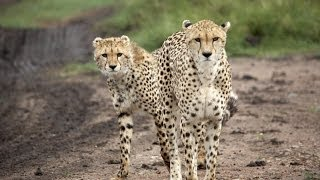 African wildlife safari: Serengeti National Park, Tanzania