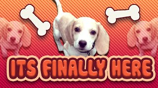 Puppy Vlog - A Huge Surprise! (mobile Games, T-shirts, Mod Packs, Insomnia)