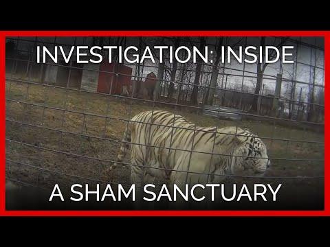 A PETA Exposé Inside A Sham Sanctuary