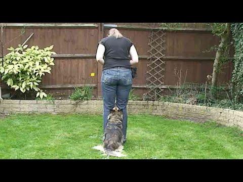 Teaching dog tricks: hide