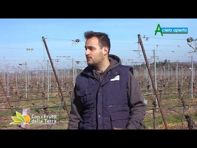 Puntata del 4/4/21 –  1° parte – L'agricoltura punta sull'e-commerce