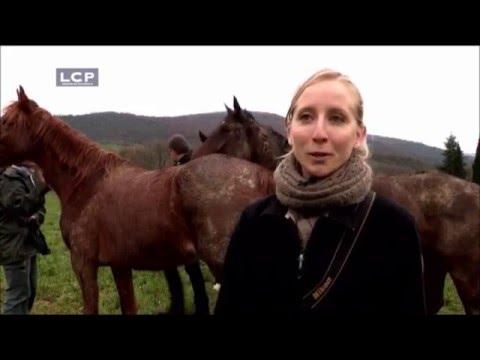 Présentation de notre programme de réhabilitation de chevaux