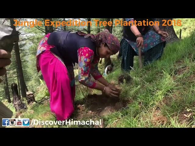 tree plantation video, tree plantation clip