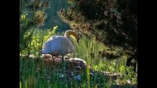 Allegro.Spring.Le Printemps.Der Frühling.La primavera.The Four Seasons.Antonio Vivaldi.