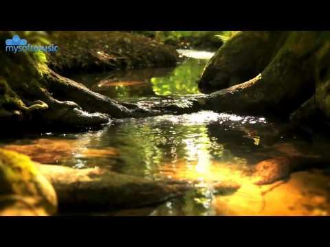 su sesi ve ormanda kuş ötüşleri