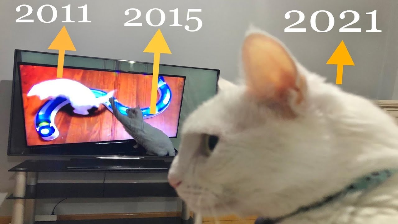 CATception! Cat's Reaction to His Old Videos