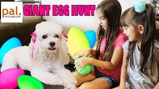 GIANT SURPRISE EGG HUNT with a Puppy - Hidden Surprise Toys - Pets for Kids - Pets Add Life