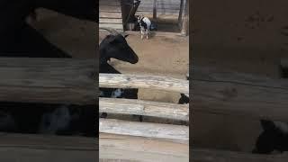Секс с животными
