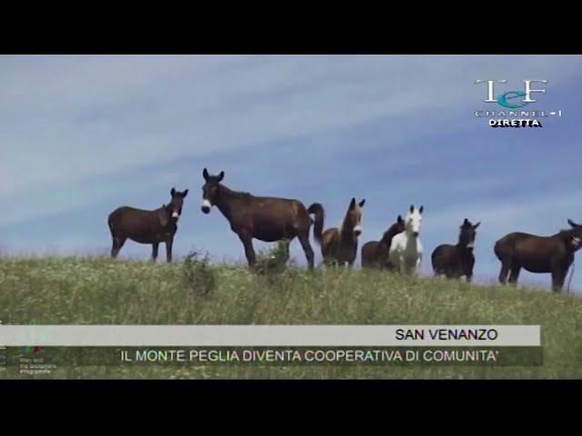 Cooperativa di comunità Monte Peglia Tef Channel
