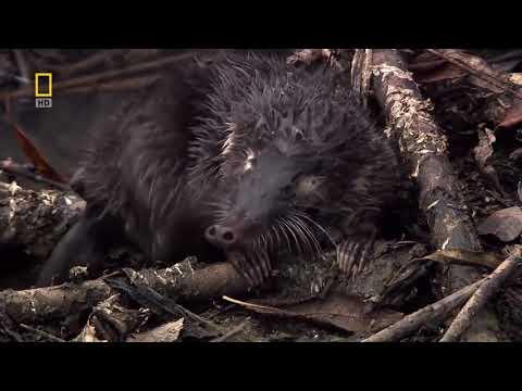 Дикая природа России  Урал  National Geographic Full HD 1080