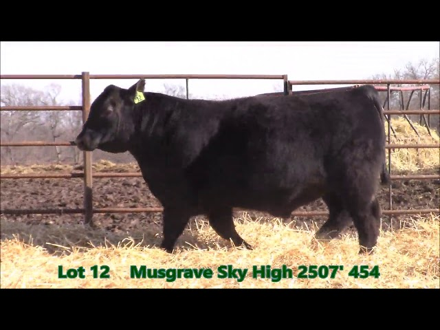 Musgrave Angus Lot 12