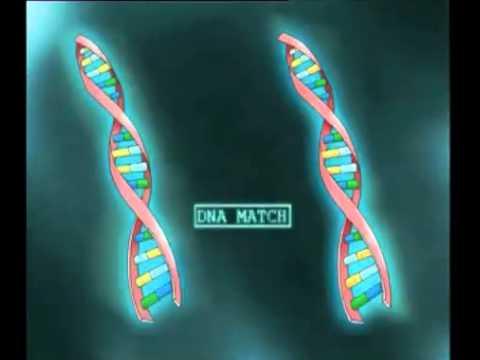Public Understanding of Biotechnology Animation 2008: Forensics