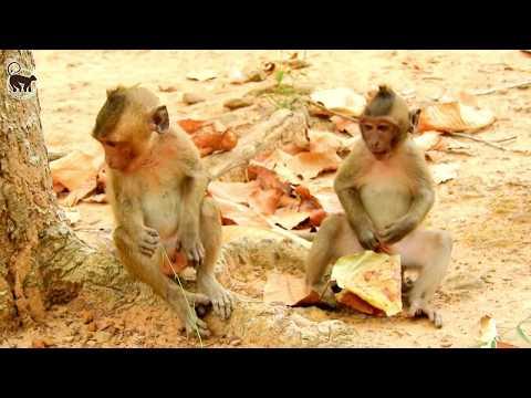 Timo & JR Long Relationship,Cute Timo & JR monkey