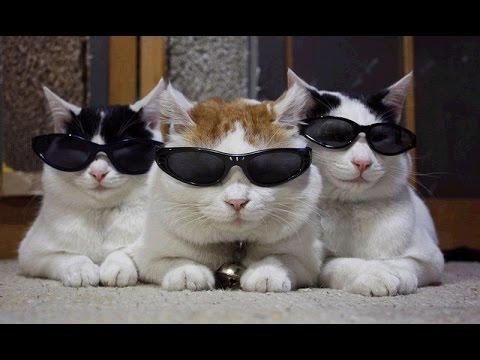 ЛУЧШИЕ ПРИКОЛЫ с котами Самые смешные видео про кошки коты  Подборка лучших  приколов за 2017 год