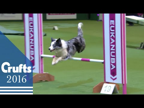 Agility  Championship Final | Crufts 2016