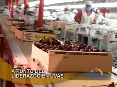 Lima: Perú se convertirá en primer exportador de uvas en Sudamérica