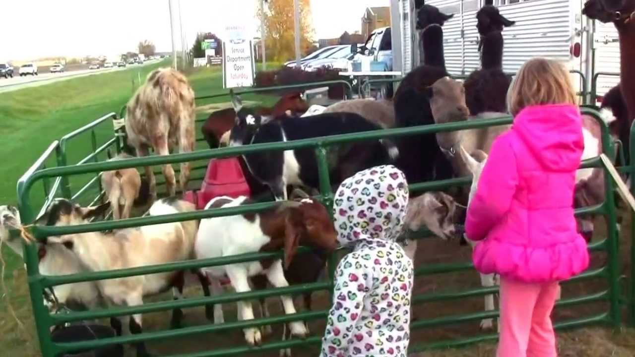 Call 815 600 6464 Animal Entertainment Rental Chicago Mobile Petting Zoo Rental Chicago Illinois