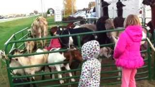 Call 815-600-6464 Animal Entertainment Rental Chicago, Mobile Petting Zoo Rental Chicago, Illinois