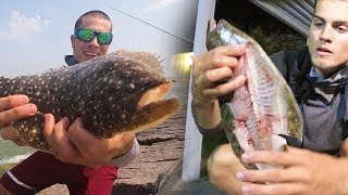 these fish don't like being caught - flounder catch n cook
