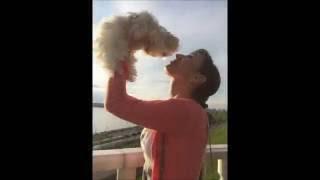 Купить щенка Мальтезе , Усси-Пусси Золотой орешек, Мальтезе