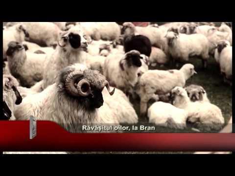 Accident rutier cu blocaj feroviar from YouTube · Duration:  1 minutes 9 seconds