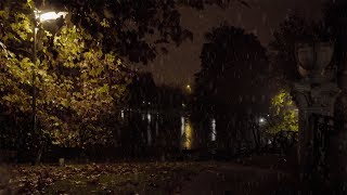 Relaxing Natural and Detailed Sound of Rain on Tree Leaves Near the Lake at Night