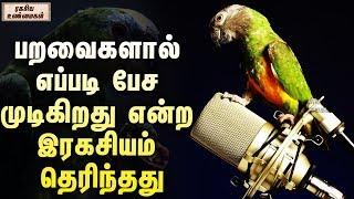 பறவைகளால் எப்படி பேச முடிகிறது என்ற இரகசியம் தெரிந்தது | ரகசிய உண்மைகள் | Unknown Facts Tamil
