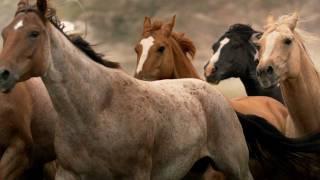 Prairies by Horseback - Travel Alberta, Canada