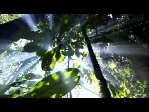 Return To Innocence - Enigma Beautiful Mother Nature [HD]