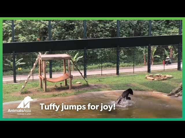 Freed from a bear bile farm – Tuffy jumps for joy
