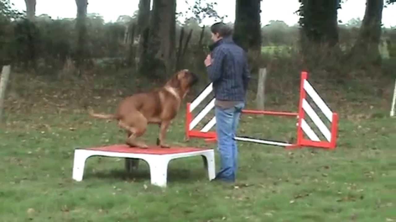 club canin bordeaux