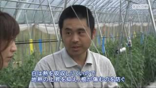 2016年6月放送 「万願寺甘とう 岡安さん(舞鶴市)」 ブランド野菜に認証...