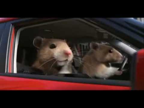 Reklama Za Kiju Soul -- Hrčci (Hamsters)