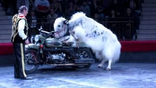 Симферополь, цирк, новая программа. Животные