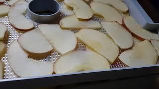 식품 건조기 과일 부터 간식 까지  ..