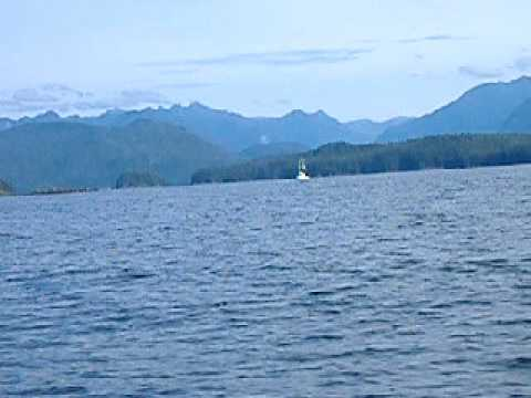 Whale Watching In Tofino