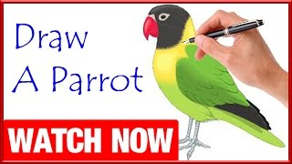 How To Draw A Parrot(defi)  - Learn To Draw - Art Space