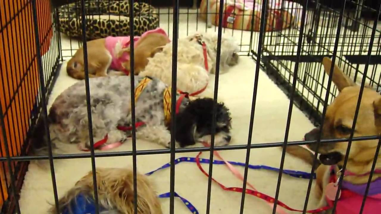 FOCHP Pet Adoption Event at Petco in Lake Forest