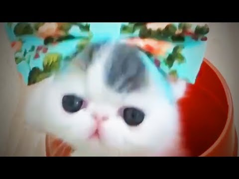 Cute Pets 😂 Funny and Awesome Pets (Full) [Funny Pets]