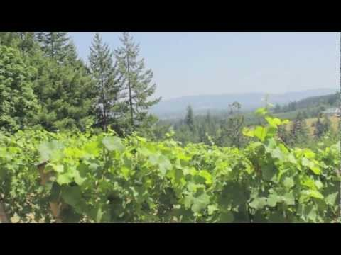 Luxury Oregon View home and Pinot Noir Vineyard for sale - 19100 NE WILLIAMSON RD Newberg, OREGON