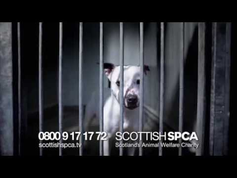 Scottish SPCA advert.flv