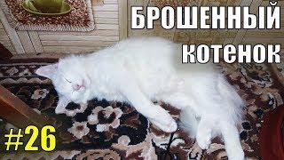 Брошенный котенок #26 Играющий котенок ТУРЕЦКАЯ АНГОРА - Спасение животных