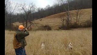 꿩 사냥,  메추리 사냥,  미국 처커 사냥, 최고 사…