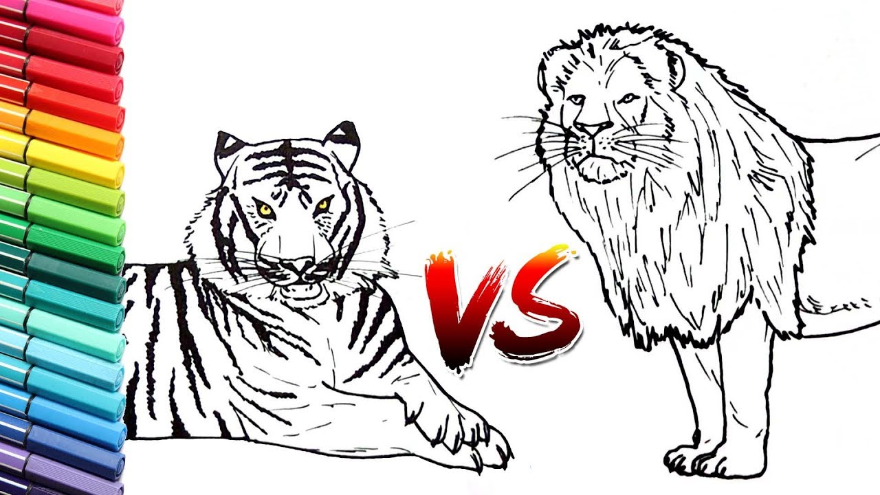 How to Draw Lion Vs Tiger Wild Animals Color pages for ...