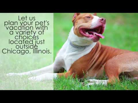 Unique Pet Vacations for Illinois Residents - Getaways for Dogs in Chicago