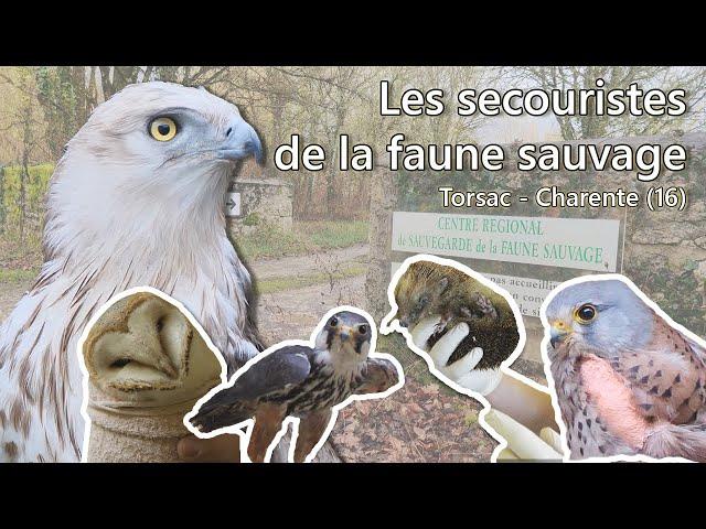 Les secouristes de la faune sauvage - Ep. 1